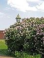 Петропавловская крепость, сквер с северной стороны01.jpg