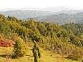 Планина Озрен (66).jpg