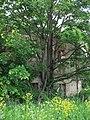 Постройка спрятана за деревьями..JPG