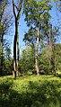 Севастопольський парк IMG 7002.jpg