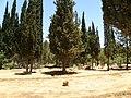 בית הקברות הבינלאומי של האגודה המשיחית השליחית (5857922684).jpg