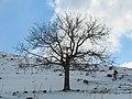 بارش برف در روستای جاسب قم- قله ولیجیا 19.jpg