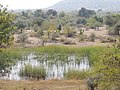 गवताळ कुरणातील पाणवठा, लळिंग, धुळे Small water pond in grassland,Laling, Dhule.jpg