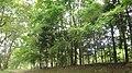 七ツ洞公園 - panoramio - CyberOyaji.jpg