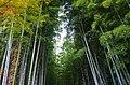 化野念仏寺 Bamboo grove in Adashino Nembutsuji 2013.11.21 - panoramio.jpg