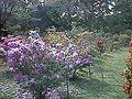 小石川植物園ツツジ園 - panoramio.jpg