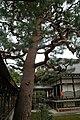 日本京都寺院264.jpg