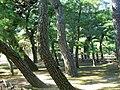 栗林公園 Ritsurin Park - panoramio (5).jpg
