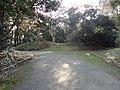 浜離宮恩賜庭園 - panoramio.jpg