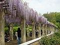 神代植物公園 2008-04-27 - panoramio (1).jpg
