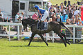 037 Epsom Derby 2015 - Kilimanjaro and Joseph O'Brien going to post (17966312144).jpg