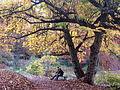 0 Amoureux sous un pterocaryer - Parc Solvay - La Hulpe.JPG
