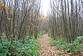 1066 Country Walk, Powdermills Wood - geograph.org.uk - 2187766.jpg