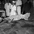 18.05.76 à l'école vétérinaire de Toulouse, opération d'un brocard jeune cerf (1976) - 53Fi898.jpg