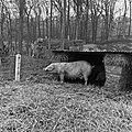 1960 domaine de Laizerie à Vaux sur Aure (Calvados)-12-cliche Jean Joseph Weber.jpg