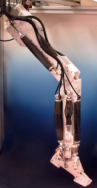 Robotics - A robotic leg powered by air muscles