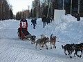 2008 Iditarod Willow (2312936296).jpg