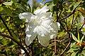 2011-03-05 03-13 Madeira 181 Monte, Jardim tropical Monte Palace.jpg