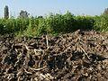 20111022umgepfluegtes Feld Hockenheim6.jpg