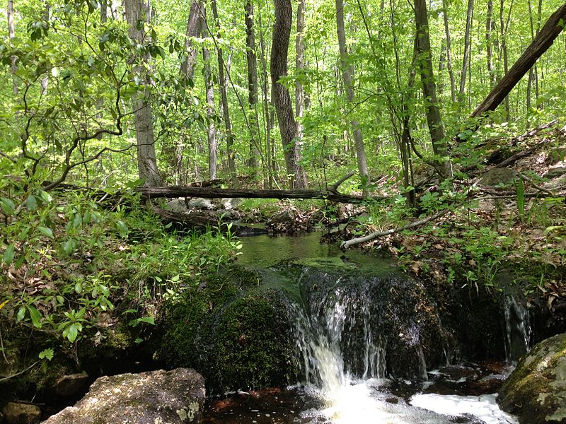File:2013-05-12 12 46 56 Stream along the Wanaque Ridge Trail in Ramapo Mountain State Forest.JPG