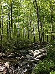 2013-05-12 15 09 39 Stream along the MacEvoy Trail in Ramapo Mountain State Forest in New Jersey.jpg