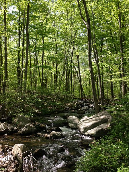 File:2013-05-12 15 09 39 Stream along the MacEvoy Trail in Ramapo Mountain State Forest in New Jersey.jpg