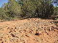 2013 - Deep Pedestelling of Native Grasses, Barely Grazed for Decades, Pecos National Historic Park, the Former Forked Lightning Ranch, NM - panoramio.jpg