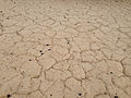 2014-08-11 11 37 43 Cracked and desicated ground near the junction of Nevada State Route 892 (Strawberry Road) and U.S. Route 50 in White Pine County, Nevada.JPG