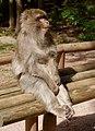 2016-04-21 13-55-42 montagne-des-singes.jpg