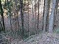 2017-11-24 (162) Haltgraben - Grüntalkogelhütte.jpg