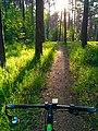 2020-06-04 Черняевский лес.jpg