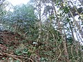 2 Chome Tsukimichō, Tajimi-shi, Gifu-ken 507-0043, Japan - panoramio (5).jpg