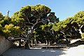30.12.16 Dubrovnik Lovrijenac Gradac Park 39 (31943824756).jpg