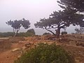 31CESAEREE today TIPAZA .The ancient Roman city in Algeria.jpg