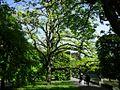 831 magnolia Gdańsk1.jpg