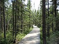 87 Spruce Bog Boardwalk.jpg