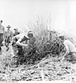 AWM 151044 clearing grass and obstacles from the Kokoda airstrip.jpg