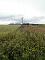 A Boundary Wall from the Bridleway - geograph.org.uk - 479754.jpg