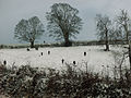 A game shooting party at Denton, Lincolnshire - Dec 2005.JPG