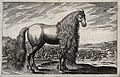 A horse with a long mane standing in front of a battle Wellcome V0048118.jpg