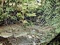 A spider's art work, wow^ - Quel beau travail de l'araignée, sansas... - panoramio.jpg