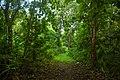 Abeokuta Forest Nursery.jpg