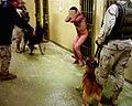 AbuGhraib13.jpg