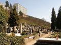 Adamov (old cemetery)2.JPG