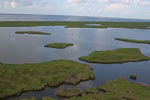 Emergency Wetlands Resources Act - Aerial View of Marsh