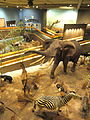 African display - Springfield Science Museum - Springfield, MA - DSC03379.JPG