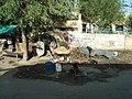 Agra - uptown - panoramio.jpg