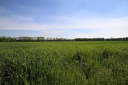 "Agricultural field near the ""Fratelli Di Dio"" entrance to Parco Alto Milanese, Legnano, May 2nd, 2015.JPG"