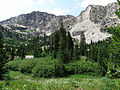 Alpine Meadow (14998437399).jpg