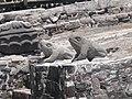 Altar der Kröten.jpg